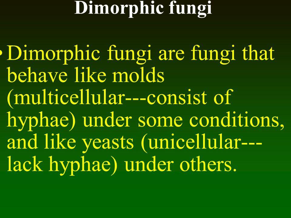 Dimorphic fungi