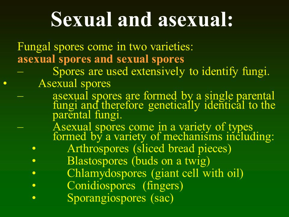 Sexual and asexual: Fungal spores come in two varieties: