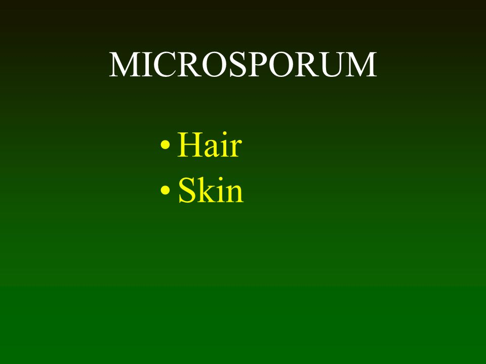 MICROSPORUM Hair Skin 57