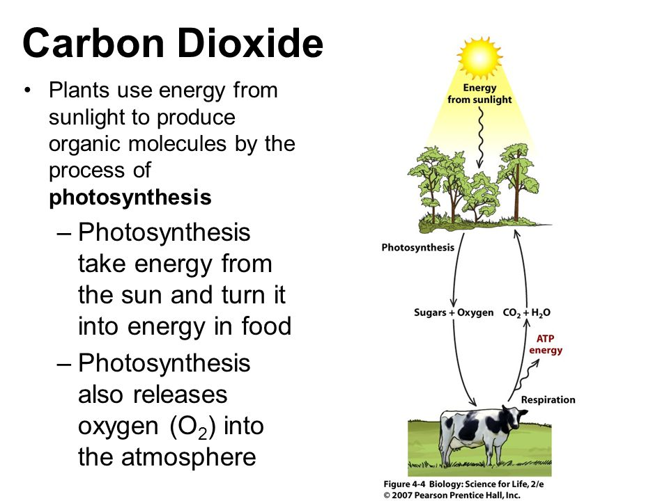 Carbon Dioxide Plants use energy from sunlight to produce organic molecules by the process of photosynthesis.