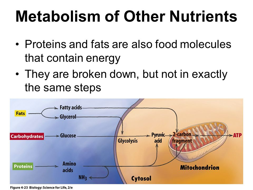 Metabolism of Other Nutrients