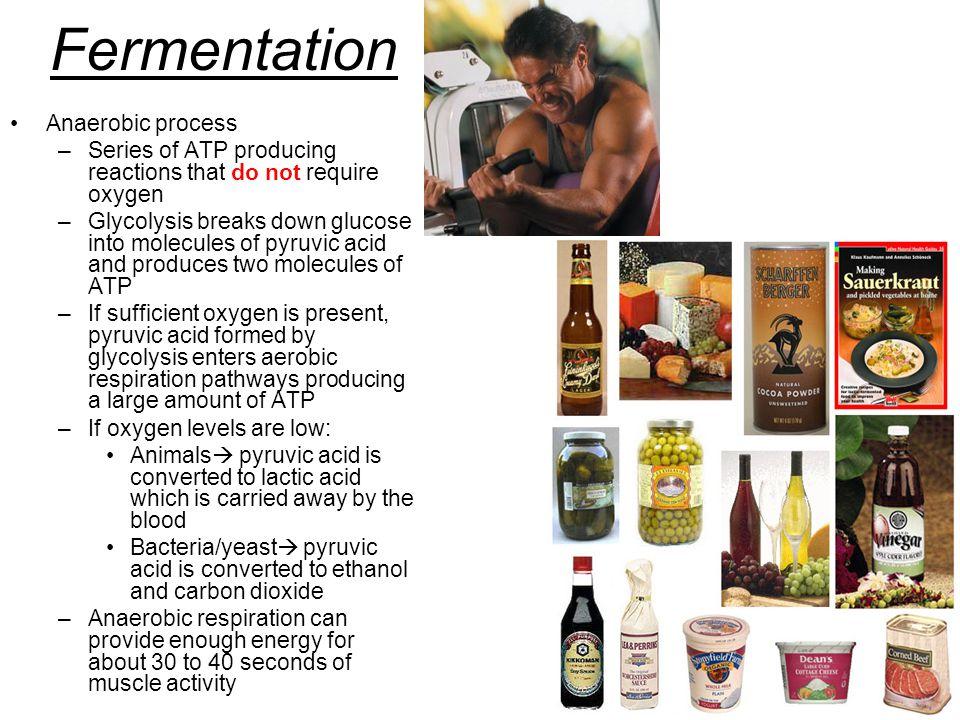 Fermentation Anaerobic process