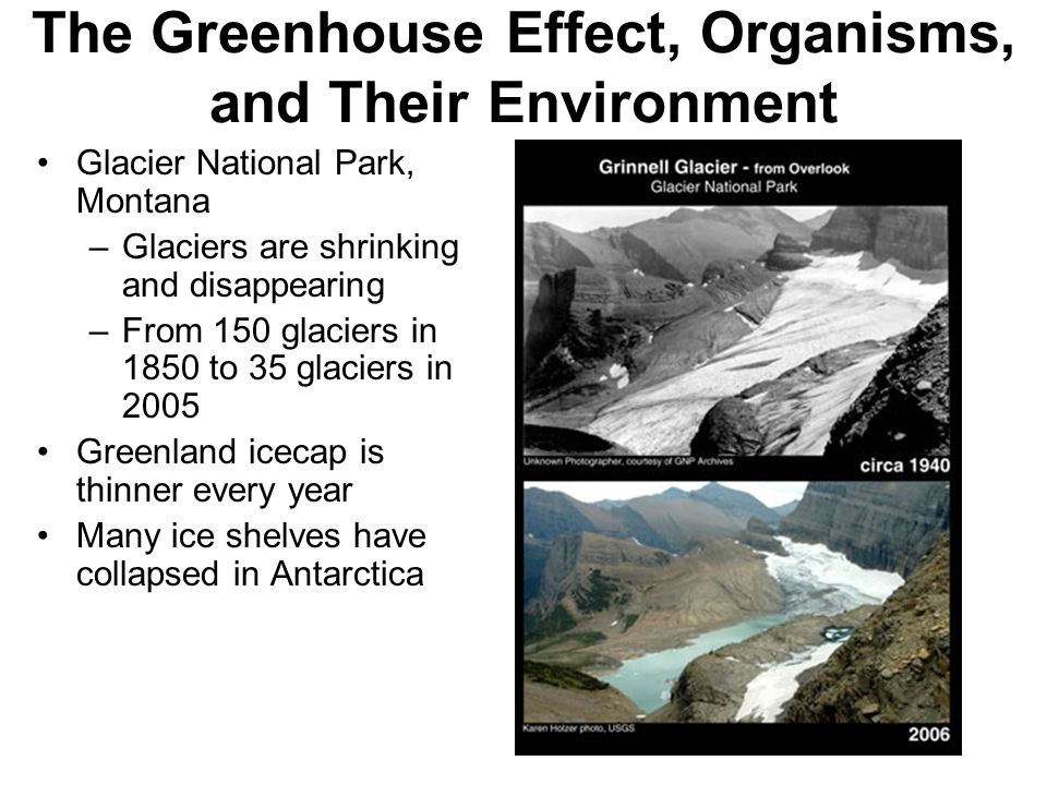 The Greenhouse Effect, Organisms, and Their Environment