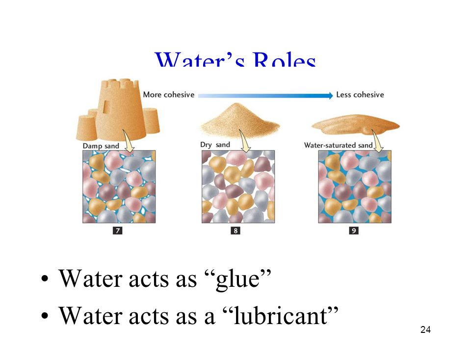 Water's Roles Water acts as glue Water acts as a lubricant