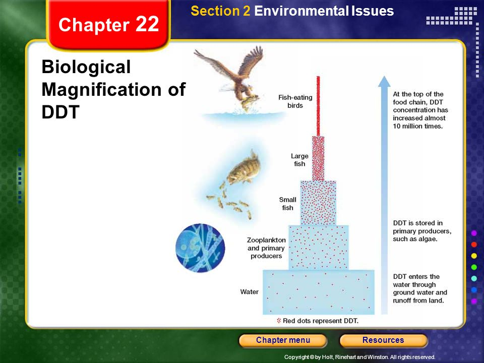 Biological Magnification of DDT