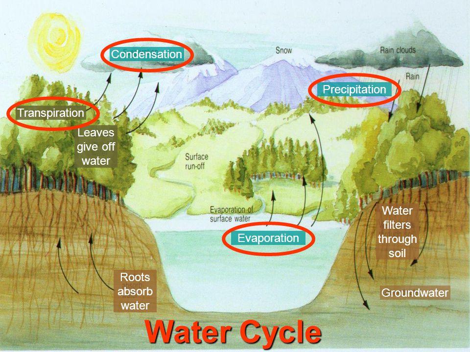 Water filters through soil