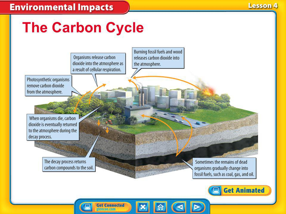 The Carbon Cycle Lesson 4-3
