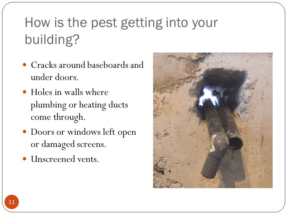 How is the pest getting into your building