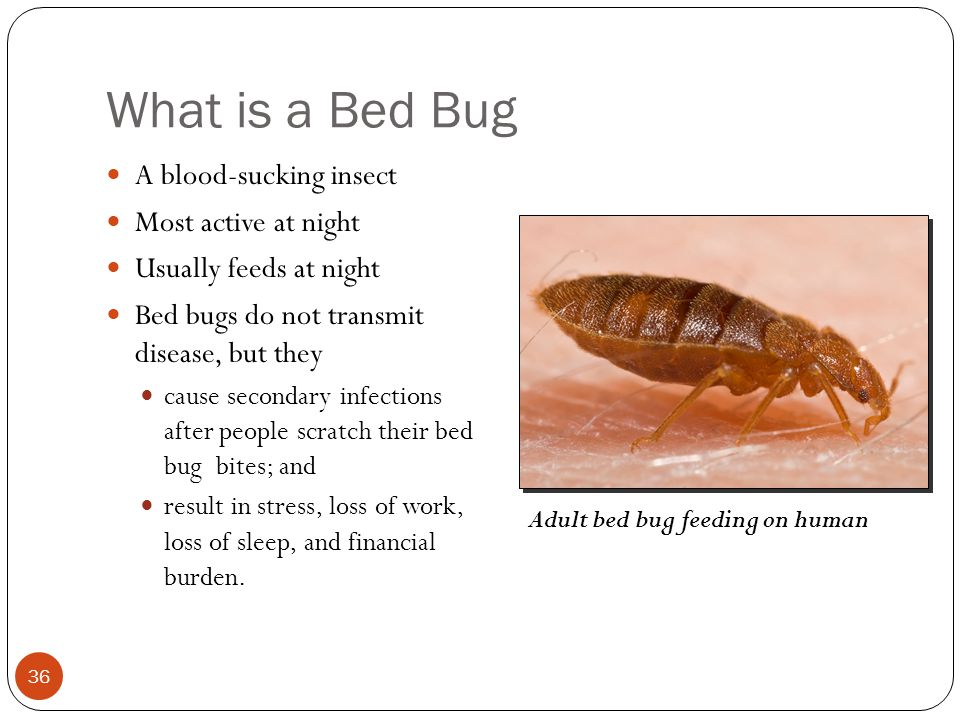 Integrated Pest Management Cockroaches Bed Bugs Ppt