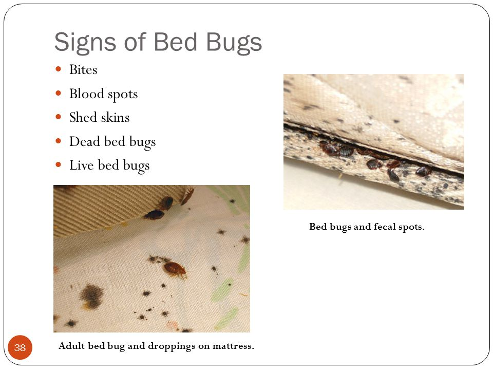 Signs of Bed Bugs Bites Blood spots Shed skins Dead bed bugs