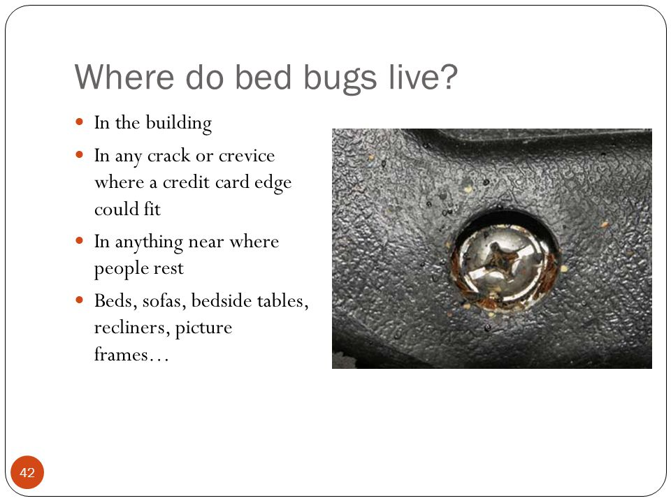 Where do bed bugs live In the building