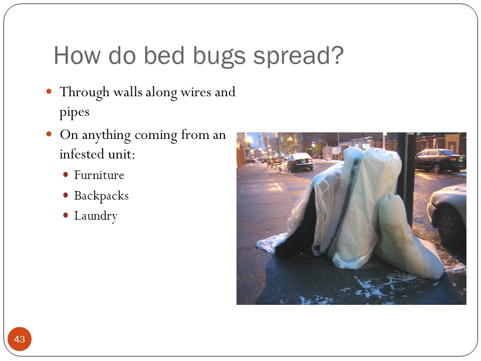How do bed bugs spread Through walls along wires and pipes