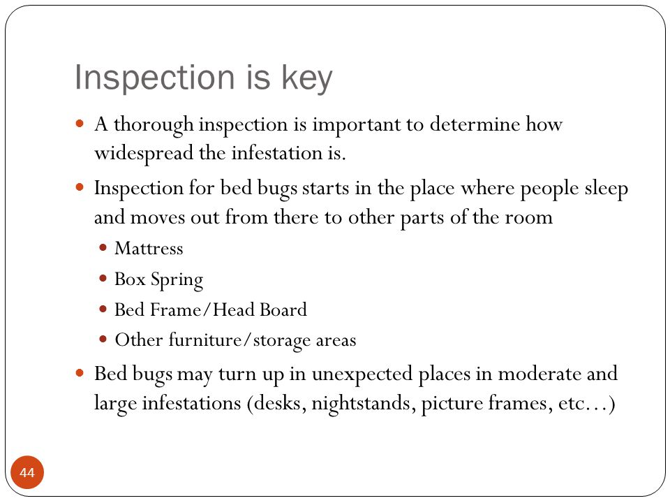 Inspection is key A thorough inspection is important to determine how widespread the infestation is.