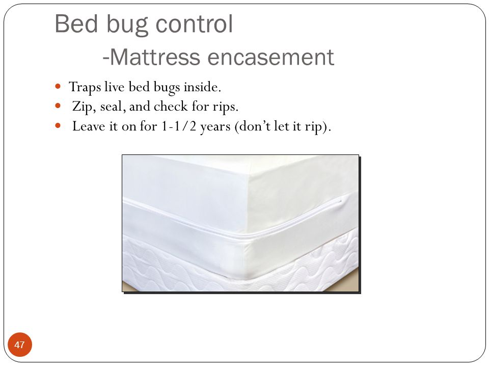 Bed bug control -Mattress encasement