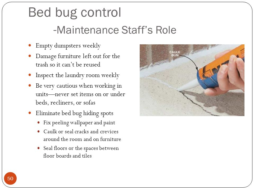 Bed bug control -Maintenance Staff's Role