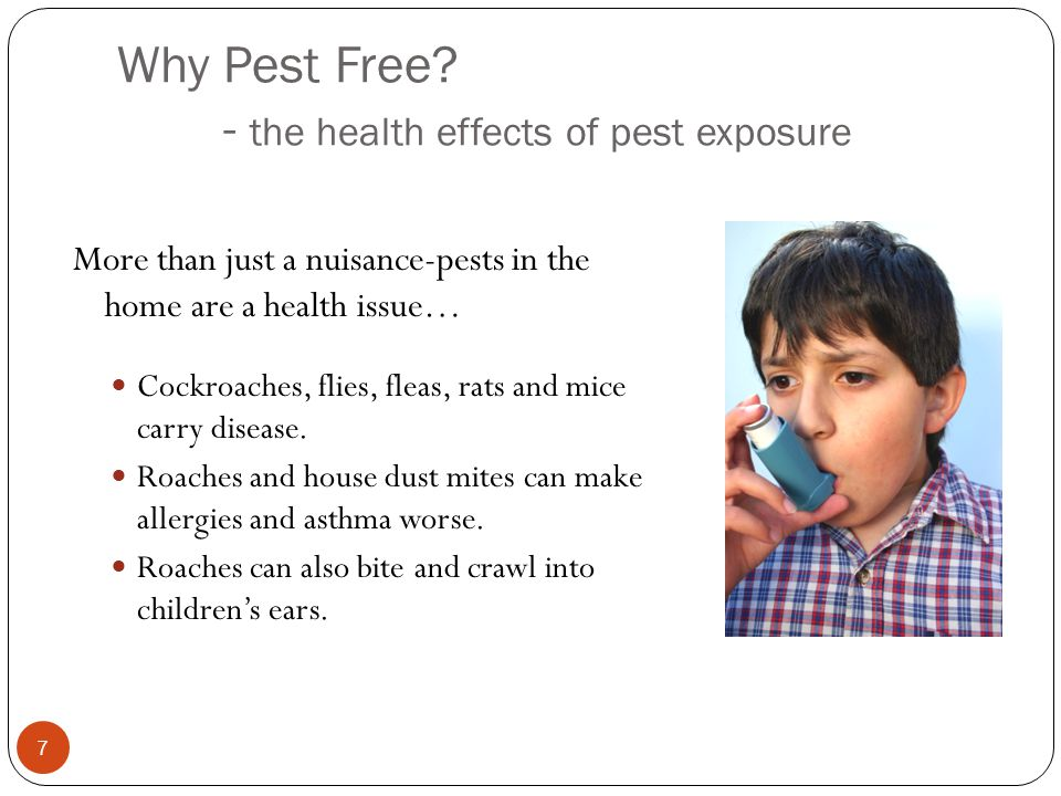 Why Pest Free - the health effects of pest exposure