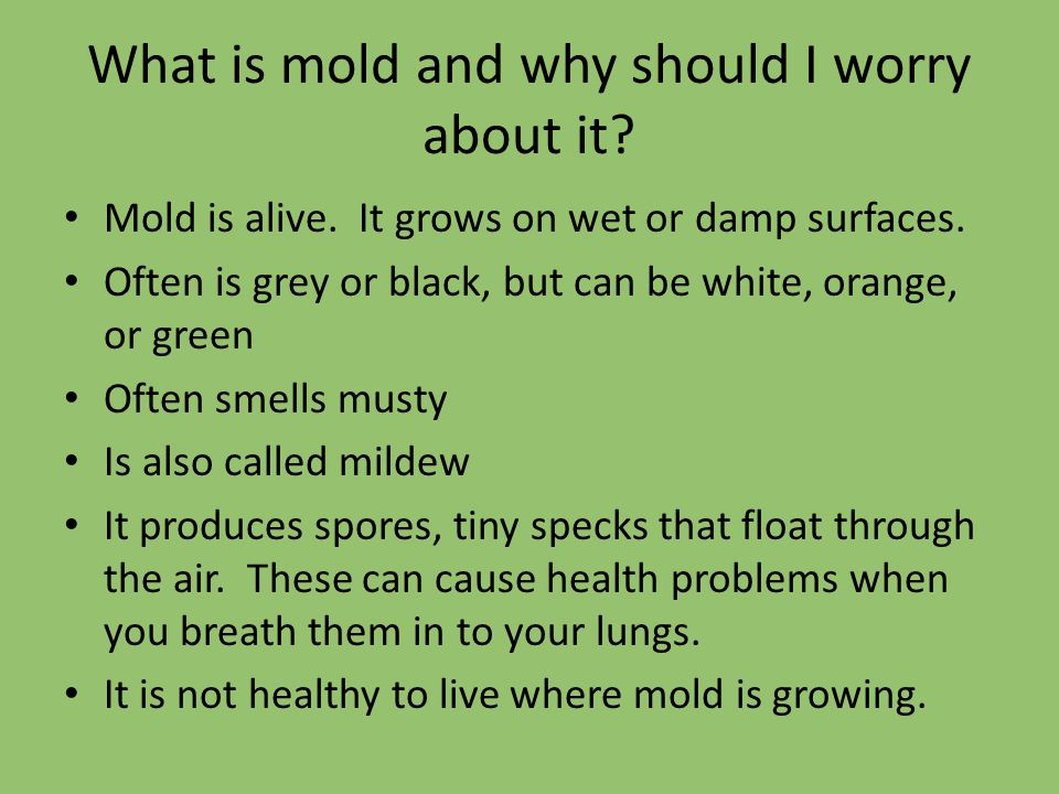 What is mold and why should I worry about it