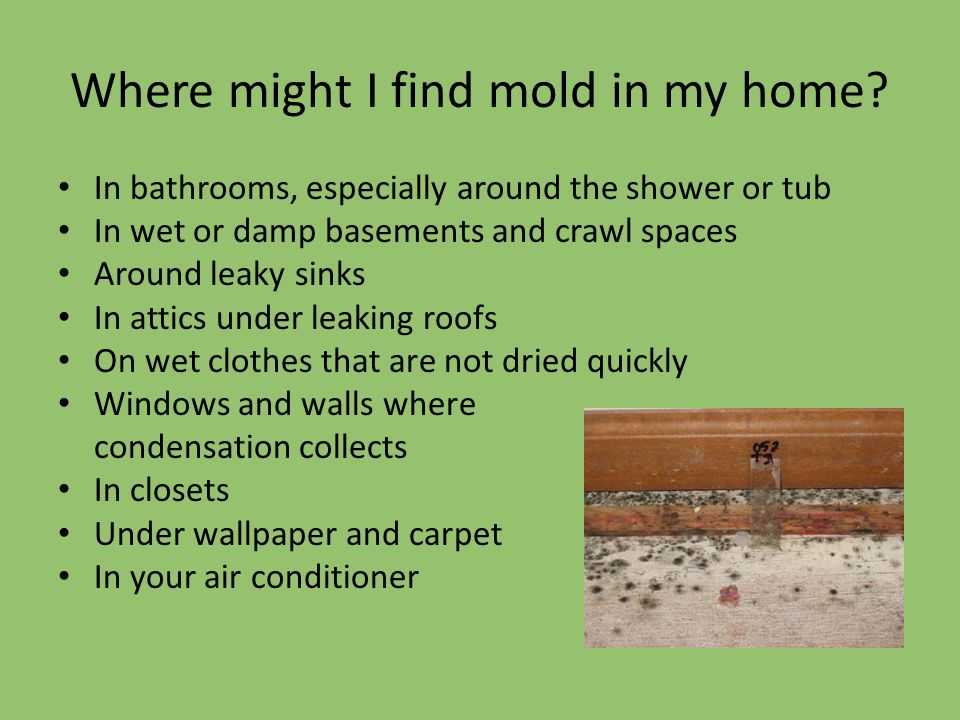Where might I find mold in my home