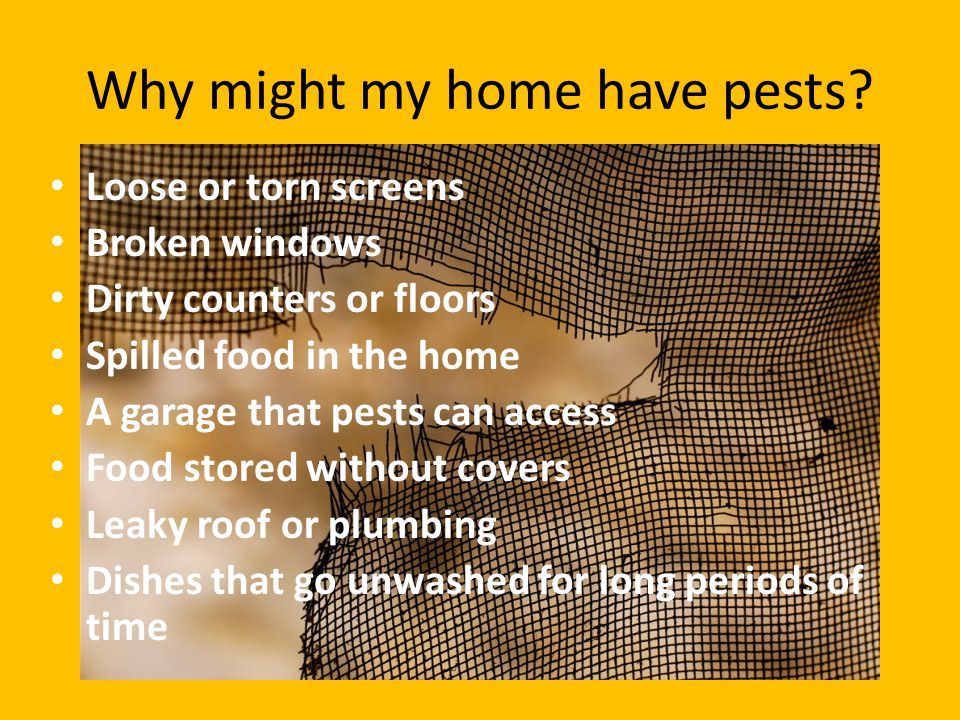 Why might my home have pests