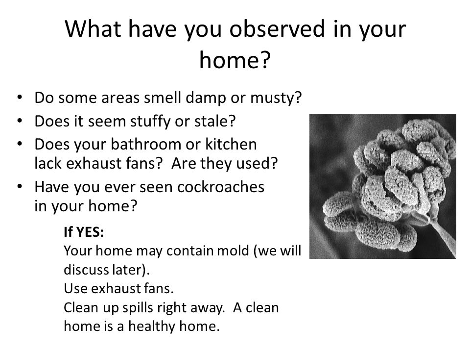What have you observed in your home
