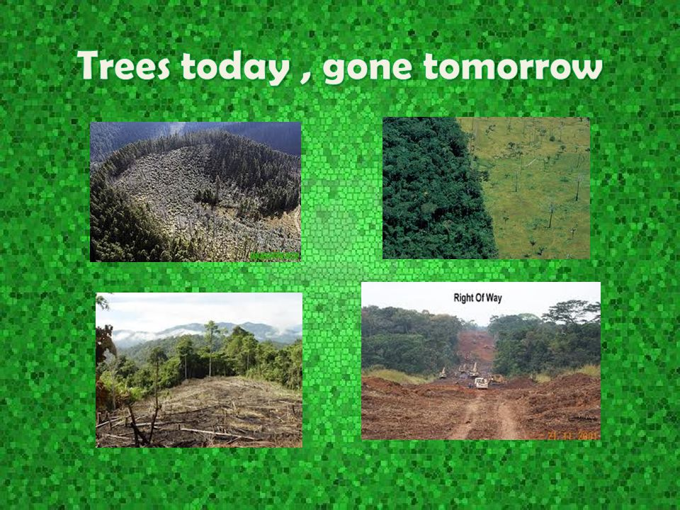 Trees today , gone tomorrow