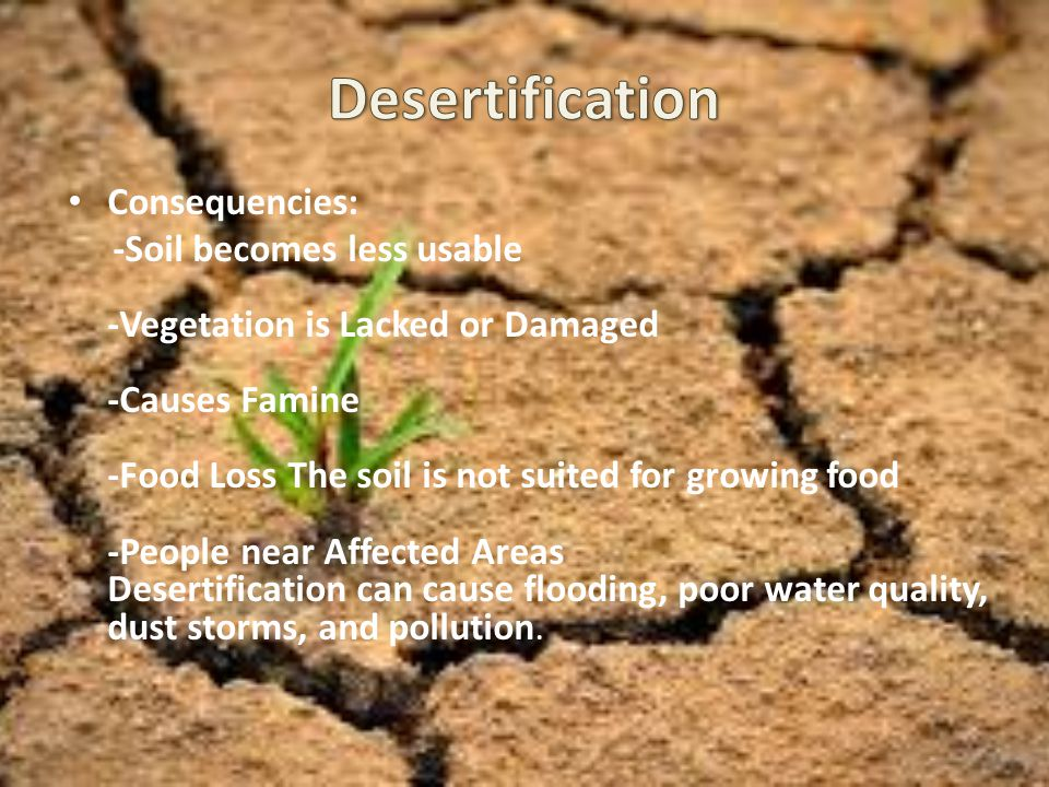 Desertification Consequencies:
