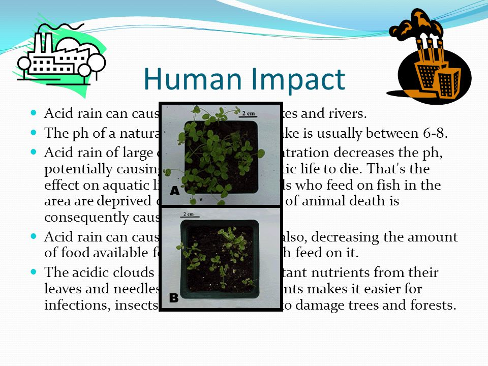 Human Impact Acid rain can cause high acidity in lakes and rivers.