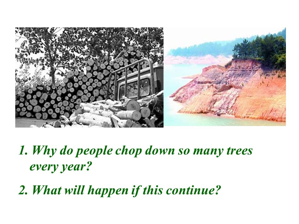 1. Why do people chop down so many trees every year