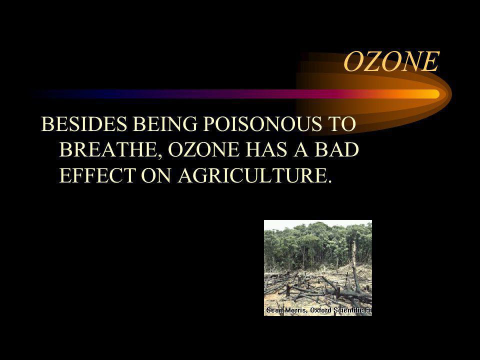 OZONE BESIDES BEING POISONOUS TO BREATHE, OZONE HAS A BAD EFFECT ON AGRICULTURE.