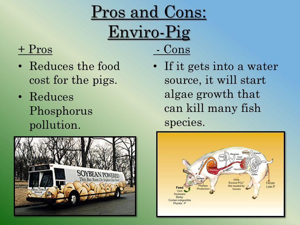 Pros and Cons: Enviro-Pig