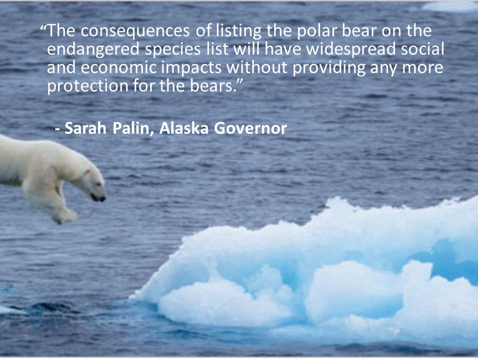 The consequences of listing the polar bear on the endangered species list will have widespread social and economic impacts without providing any more protection for the bears. - Sarah Palin, Alaska Governor