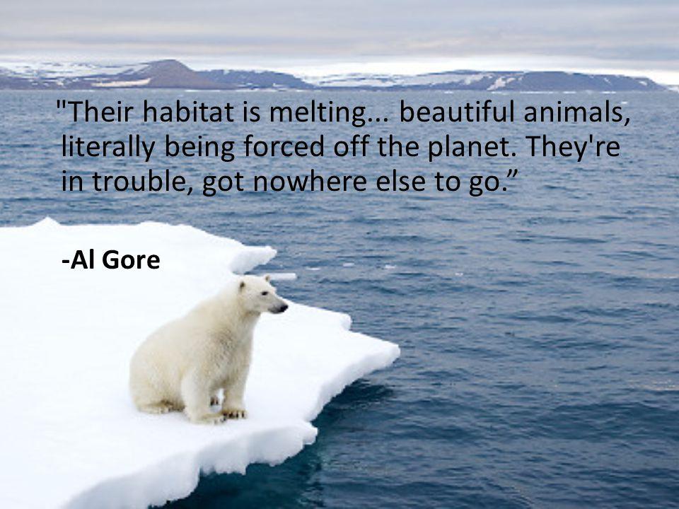 Their habitat is melting
