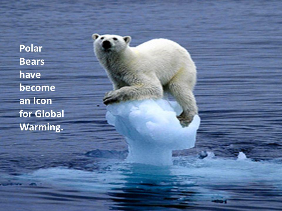 Polar Bears have become an Icon