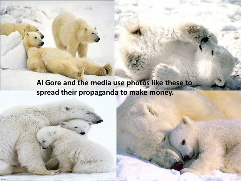 Al Gore and the media use photos like these to spread their propaganda to make money.