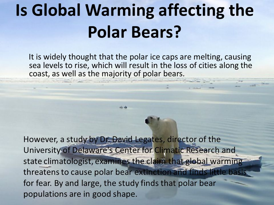 Is Global Warming affecting the Polar Bears