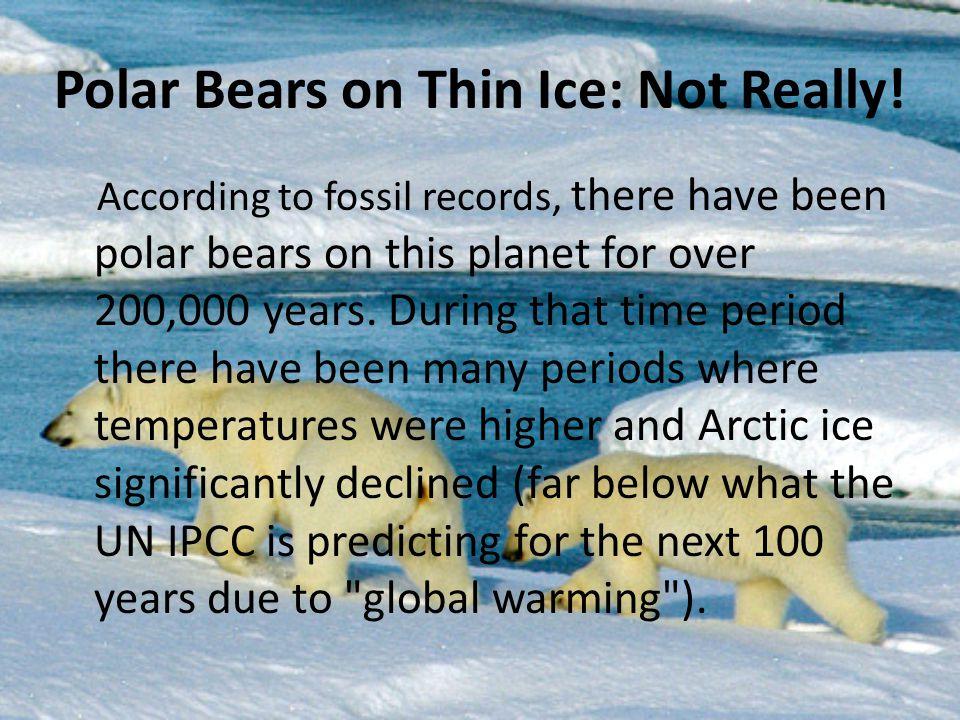 Polar Bears on Thin Ice: Not Really!