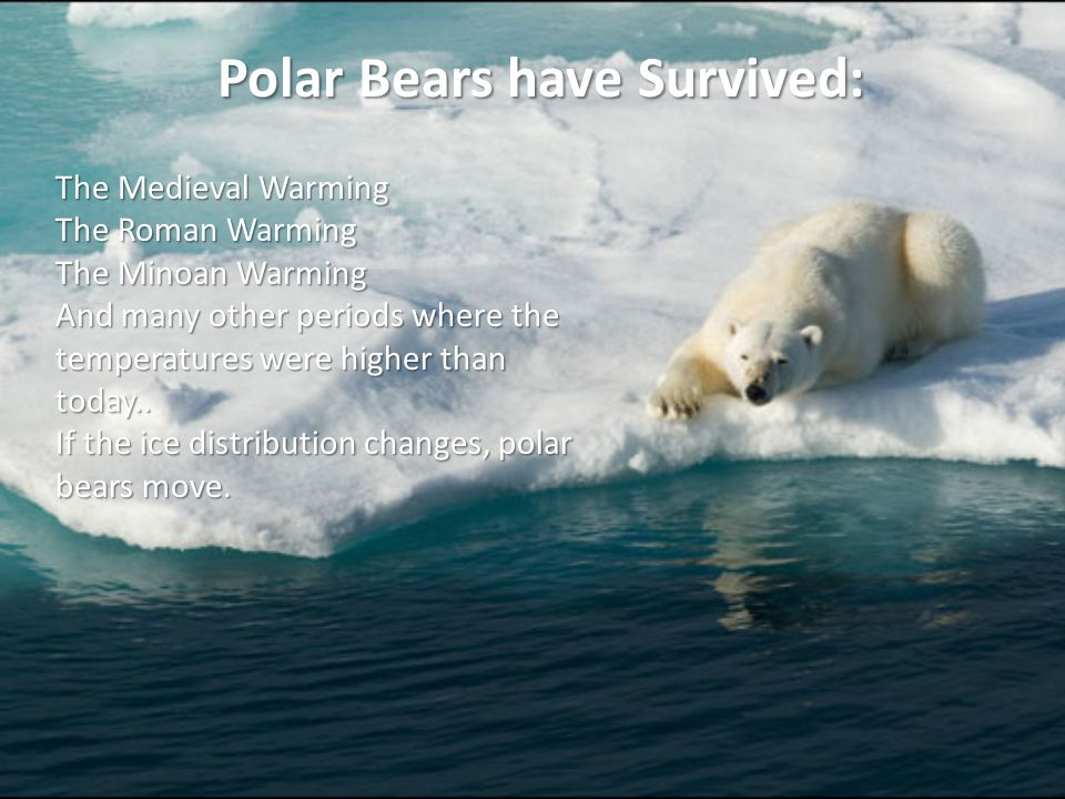 Polar Bears have Survived: