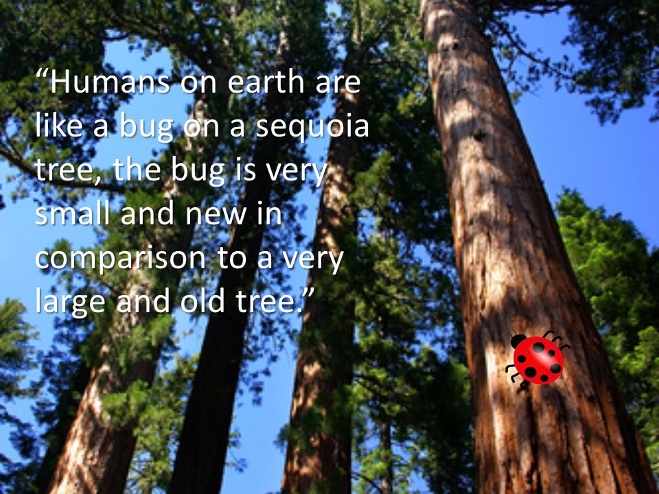 Humans on earth are like a bug on a sequoia tree, the bug is very small and new in comparison to a very large and old tree.