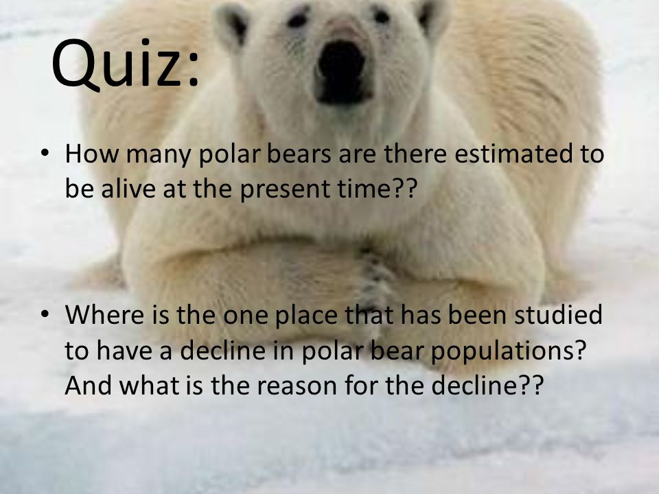 Quiz: How many polar bears are there estimated to be alive at the present time