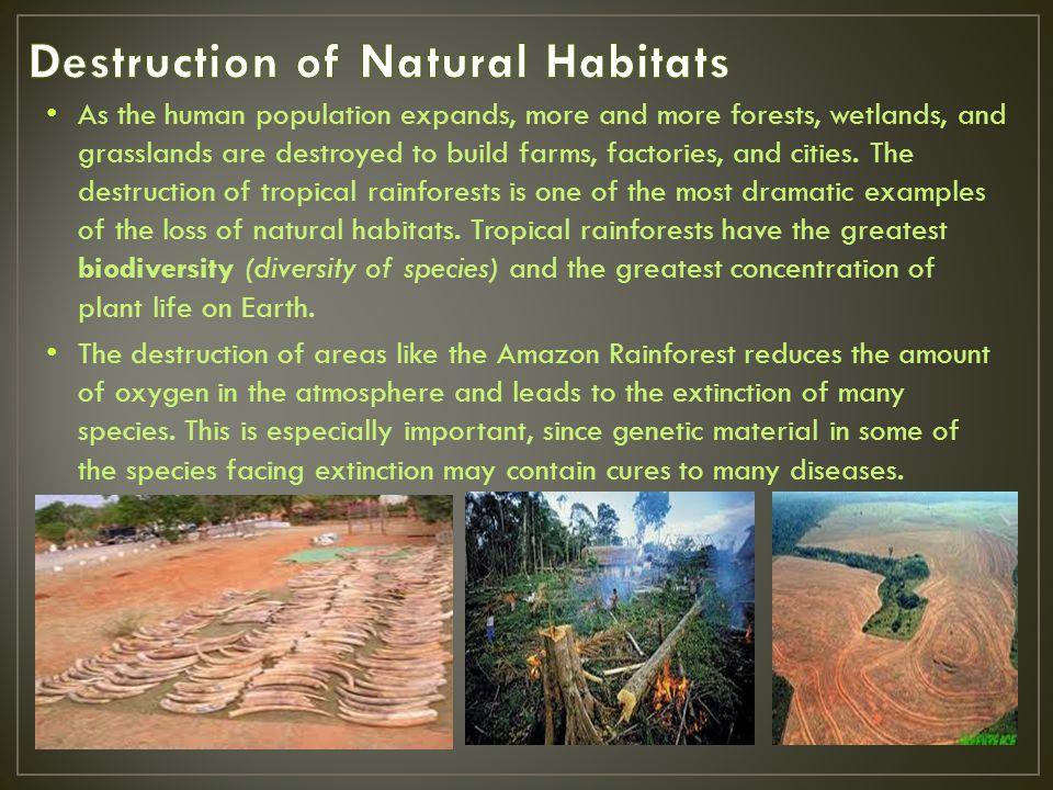 Destruction of Natural Habitats