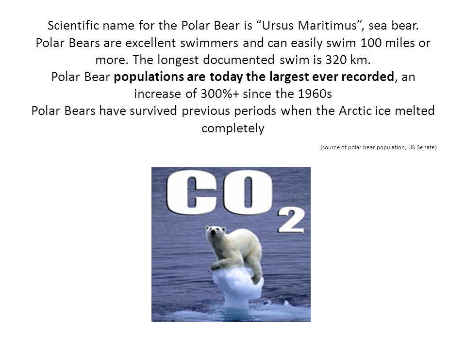 Scientific name for the Polar Bear is Ursus Maritimus , sea bear