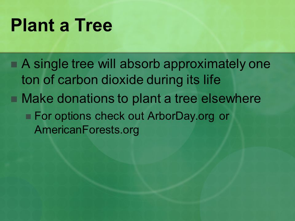 Plant a Tree A single tree will absorb approximately one ton of carbon dioxide during its life. Make donations to plant a tree elsewhere.