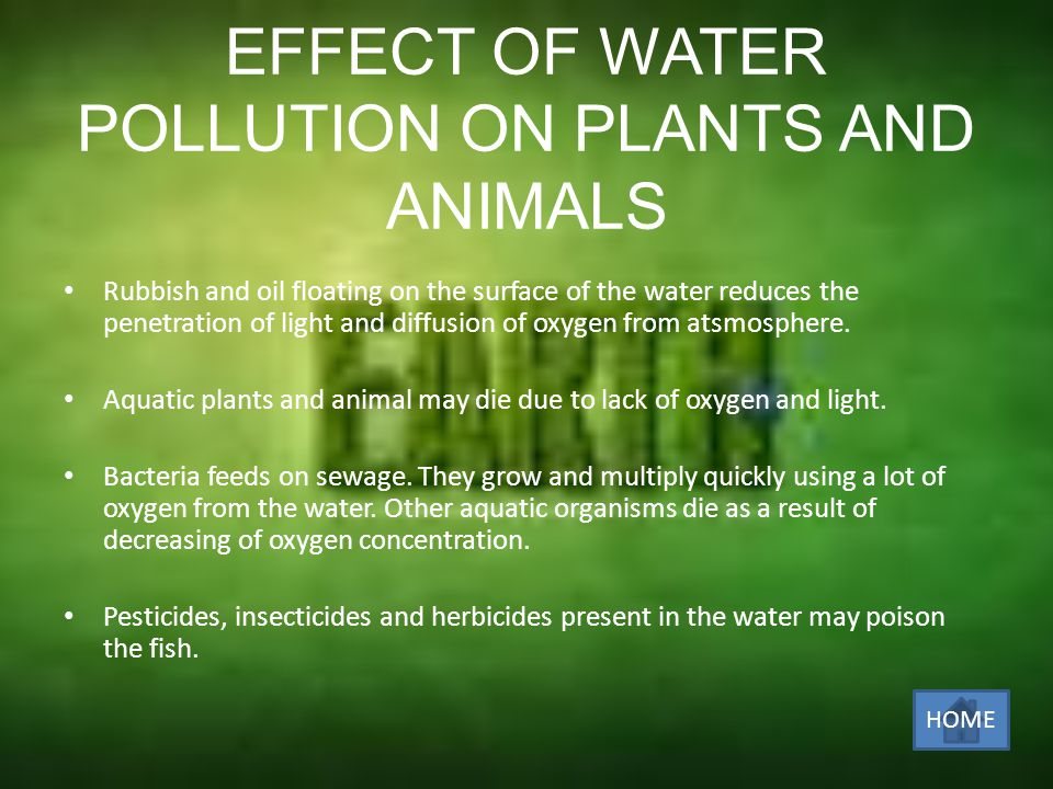 EFFECT OF WATER POLLUTION ON PLANTS AND ANIMALS