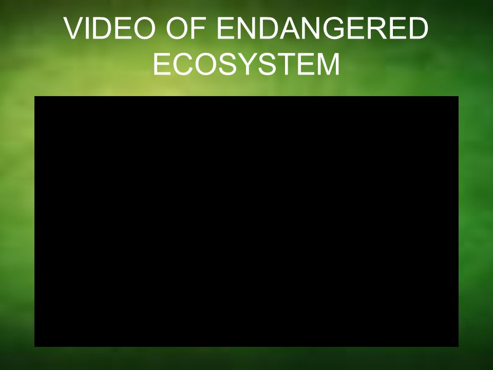VIDEO OF ENDANGERED ECOSYSTEM
