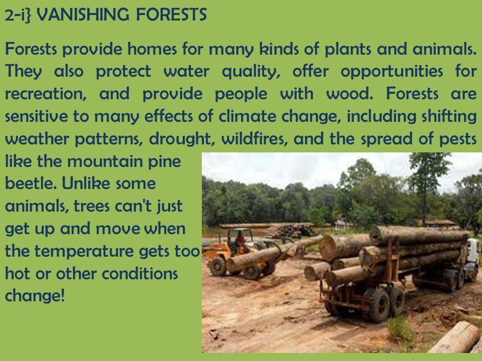 2-i} VANISHING FORESTS