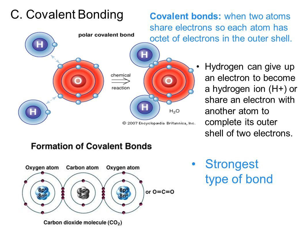 C. Covalent Bonding Strongest type of bond