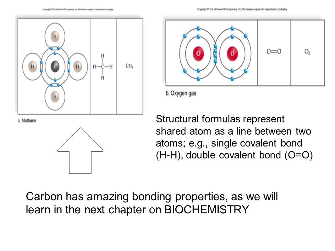 Structural formulas represent shared atom as a line between two atoms; e.g., single covalent bond (H-H), double covalent bond (O=O)