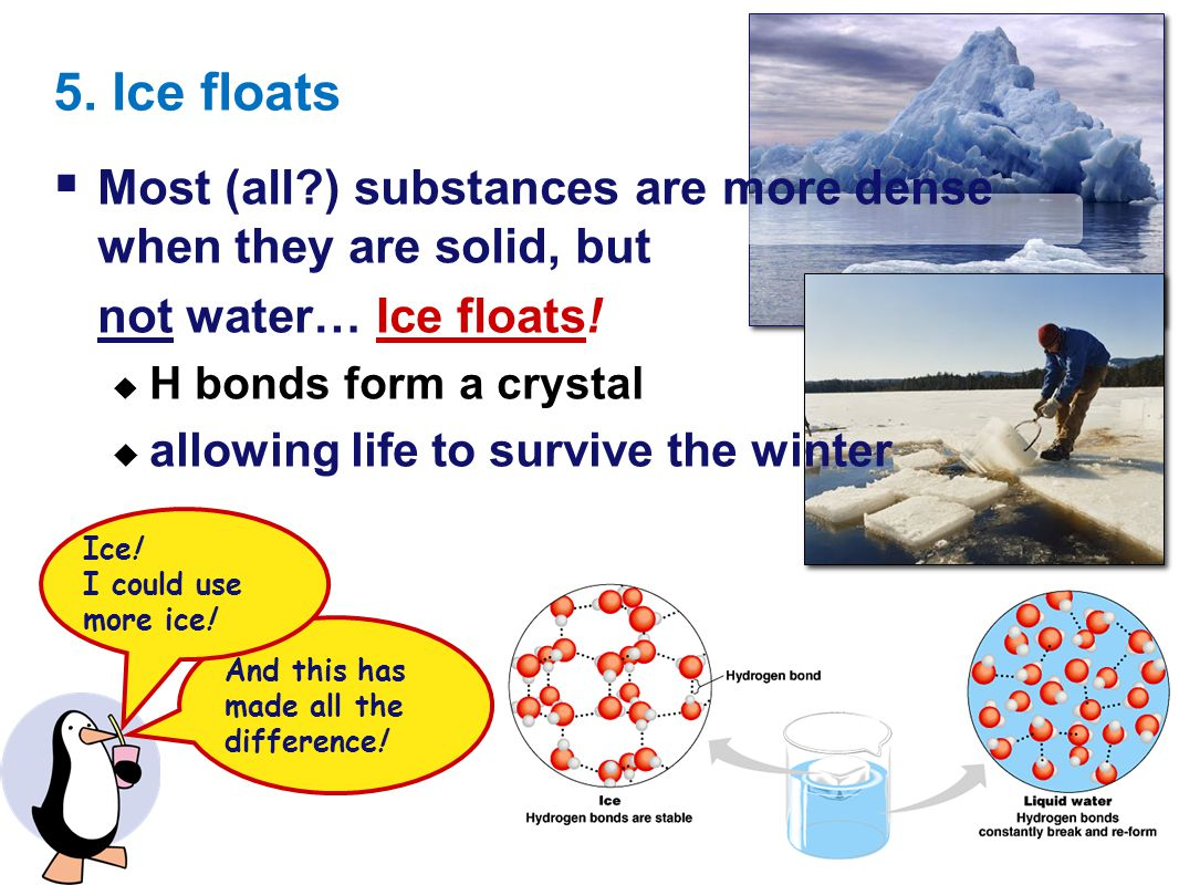 5. Ice floats Most (all ) substances are more dense when they are solid, but. not water… Ice floats!