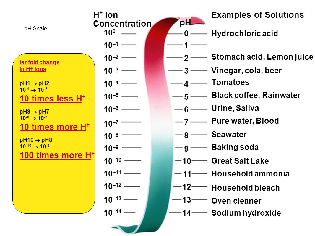 H+ Ion Concentration Examples of Solutions pH 10 times less H+