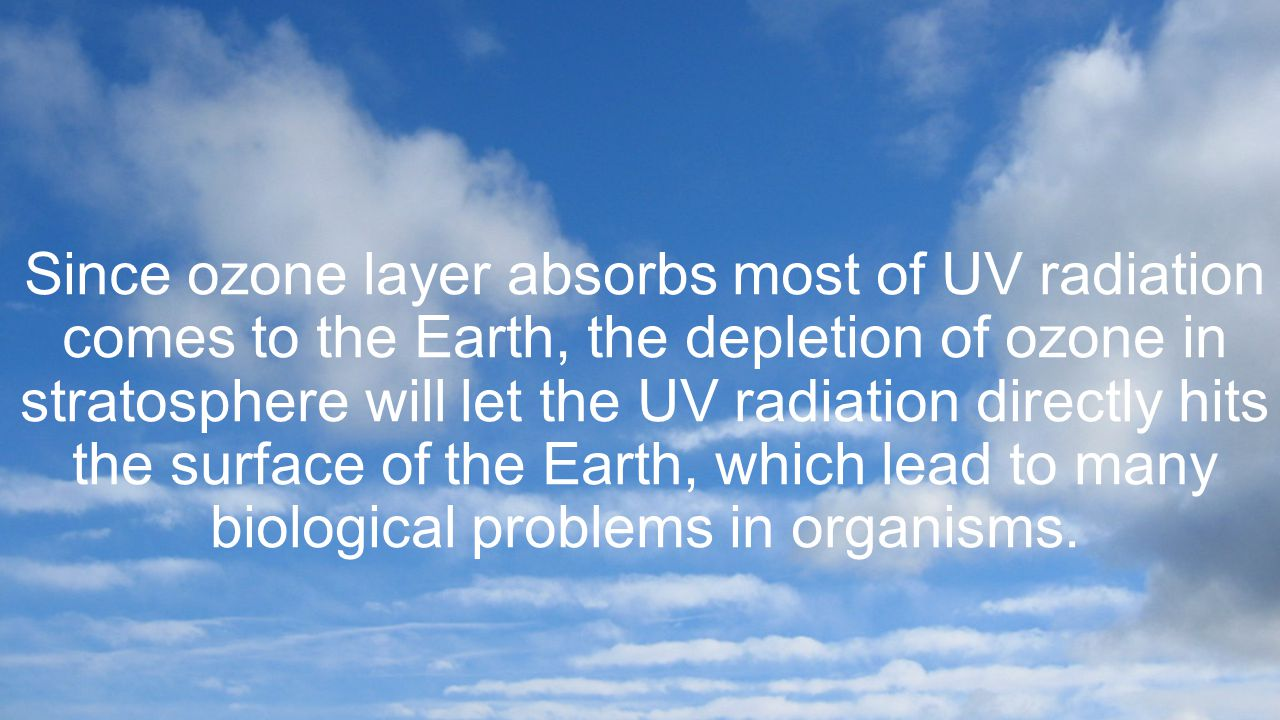 Since ozone layer absorbs most of UV radiation comes to the Earth, the depletion of ozone in stratosphere will let the UV radiation directly hits the surface of the Earth, which lead to many biological problems in organisms.
